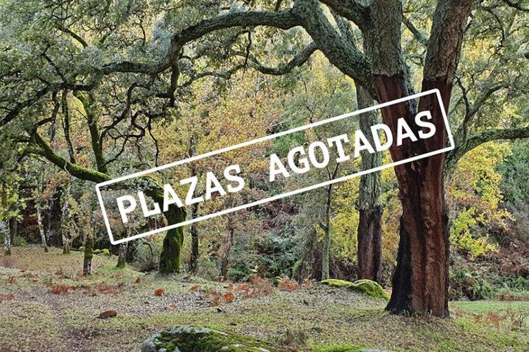 Senderismo y naturaleza Vestigia Patrimonio octubre 2020 Sierra de Huelva actividades qué hacer