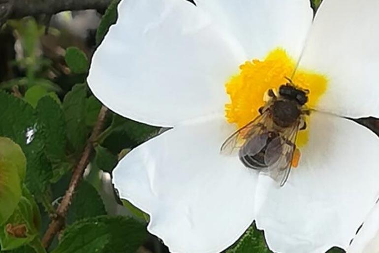 Descubre el mundo de los insectos con platalea 8 de mayo jardín botánico dunas del odiel que hacer en huelva con niños