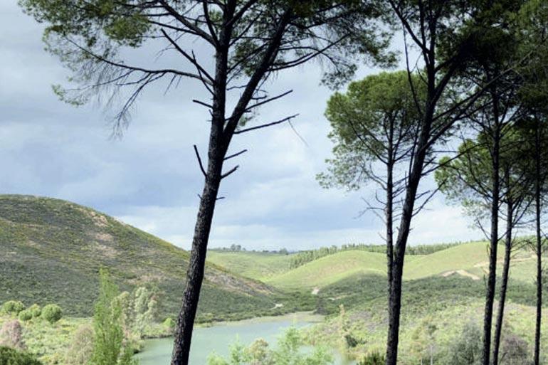 senderismo sierra la zarza sierra morena Huelva platalea