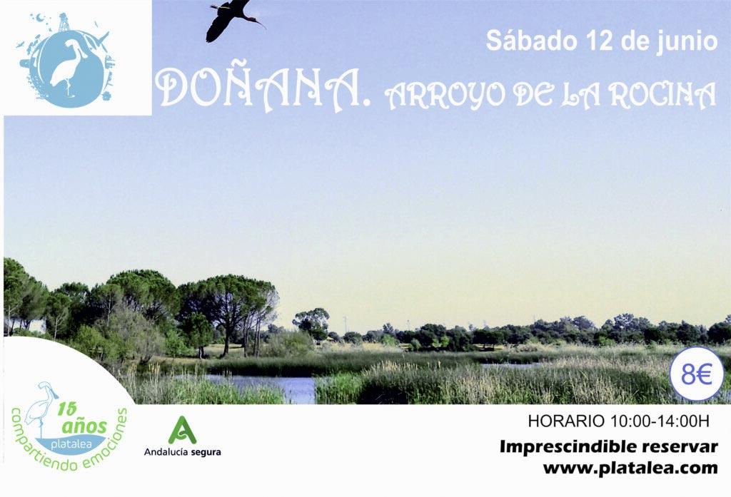 senderismo en Doñana Arroyo de la Rocina 12 de junio con Platalea